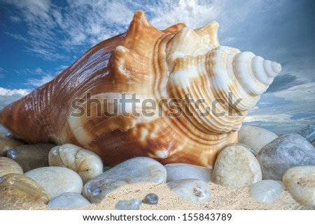 Florida Fighting Conch - stock photo