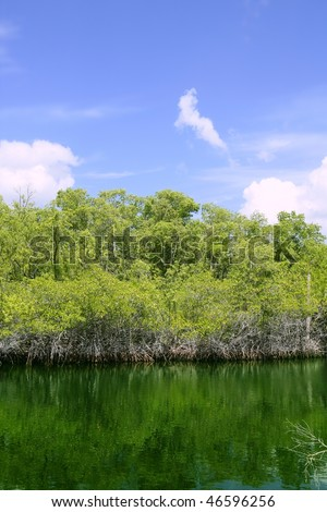Florida Keys mangrove detail green water blue sky