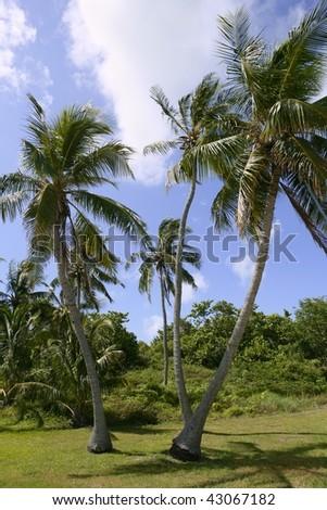 Florida Keys tropical palm trees on blue  sky - stock photo