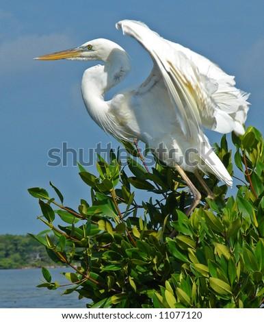 Florida's Beautiful Birds - stock photo