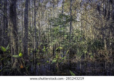 Florida tropical forest swamp - stock photo