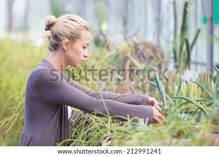 Florists woman working with topical plants and cacti in a greenhouse.  - stock photo