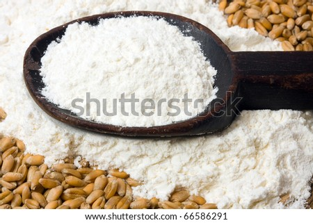 Flour on wooden spoon and wheat grain - stock photo