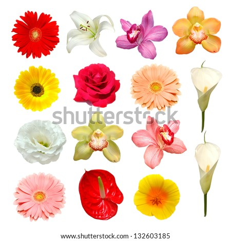 flower - stock photo