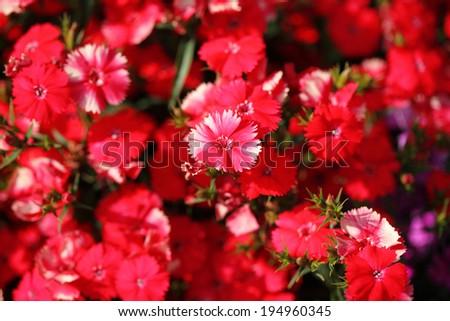 flower 11 - stock photo