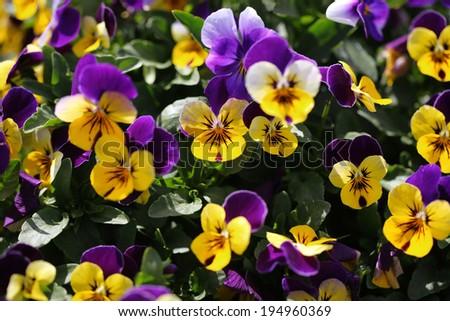 flower 19 - stock photo