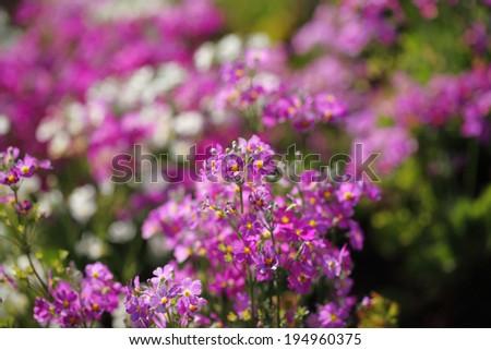 flower 5 - stock photo