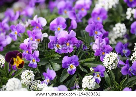 flower 15 - stock photo