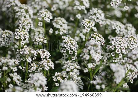 flower 12 - stock photo