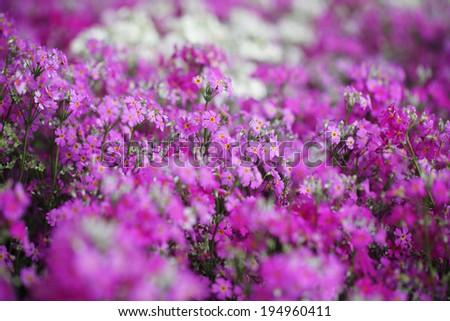 flower 8 - stock photo