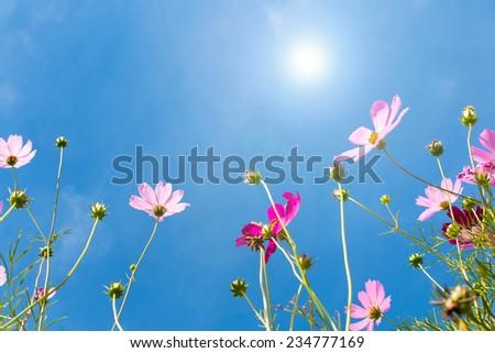 flower against blue sky under sunlight - stock photo