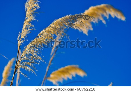 Flower and bluesky - stock photo