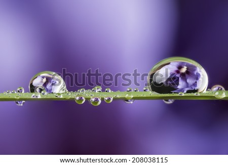 flower and dew drops - stock photo
