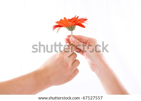 Flower and humman hand isolated white - stock photo