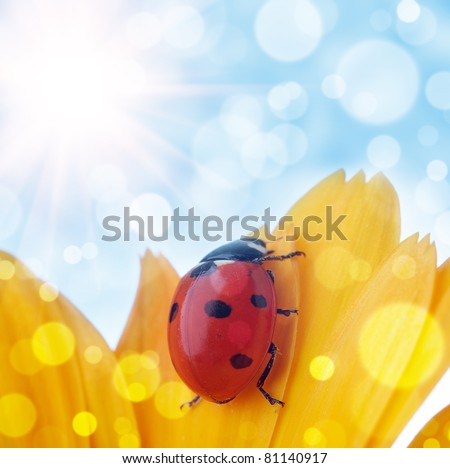 flower and  ladybug with  bokeh summer background - stock photo