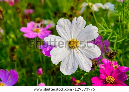 flower and natural in thailand. - stock photo