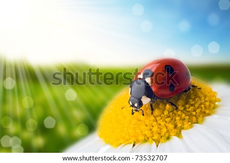 flower and nature spring bokeh background with sun beam - stock photo