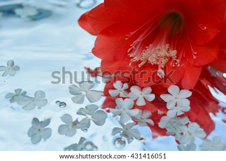Flower and reflection in pure water, cactus - stock photo