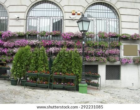 flower and shrub plant dispaly in bohemian quarter of Skadarlija Belgrade Serbia Europe - stock photo