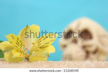 Flower and Skull on Beach, Shallow DOF - stock photo