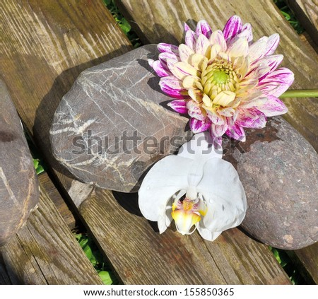 Flower and Stone