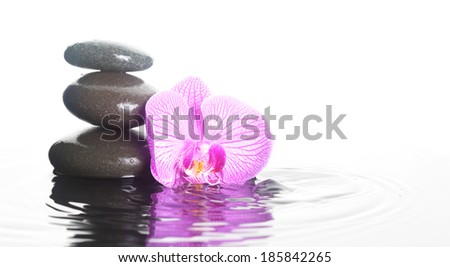 Flower and stones in rippling water