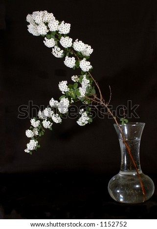 Flower arrangement isolated on black - stock photo