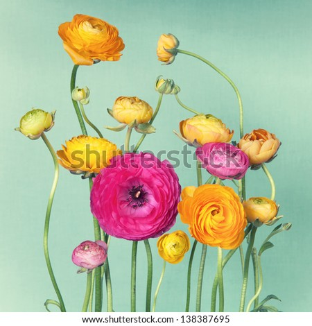 Flower arrangement of colorful ranunculuson vintage background - stock photo