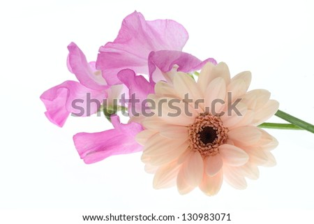 Flower arrangement of Gerbera and  sweet peer - stock photo