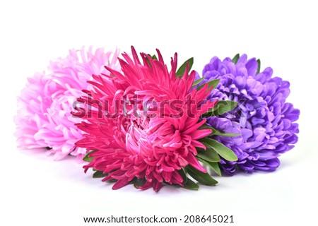 Flower aster - stock photo