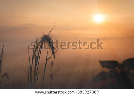 Flower at sunrise with the colorful sky. Sky, Bright Blue, Orange And Yellow Colors Sunset. Instant Photo, Toned Image - stock photo