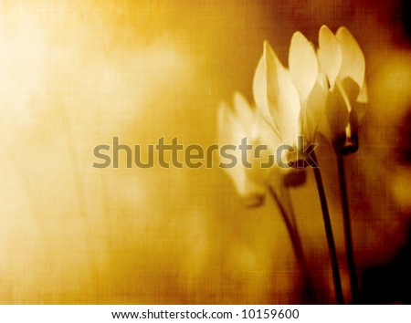 flower background - stock photo