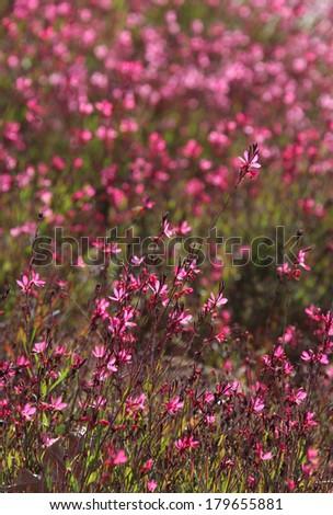 flower background - stock photo