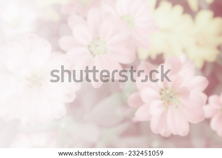Flower background, - stock photo