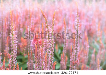 flower background. beautiful flowers made with color filters - stock photo