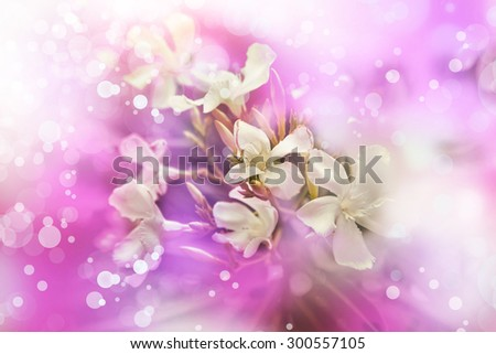 Flower background, Beautiful little white flowers made with color filters, spring bloom, retro background - stock photo