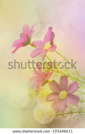 Flower background, blurred