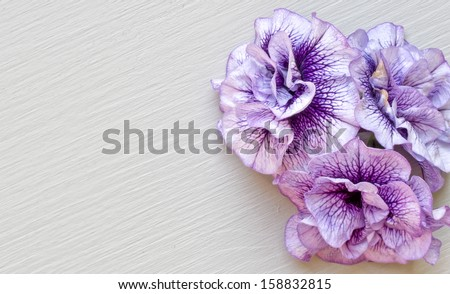 flower background purple and grey