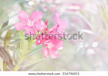 flower background, romantic flowers, beautiful flowers made with sweet soft style color filters