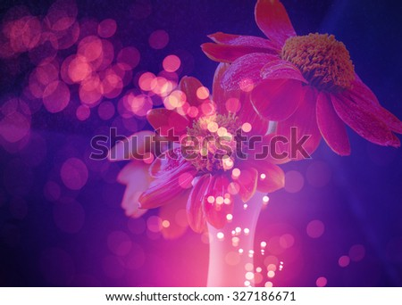 flower background with bokeh lights abstract - stock photo