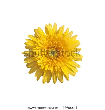 Flower,Barberton daisy:Gerbera jamesonii (Compositae) isolated on white background, with clipping path - stock photo