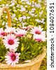flower basket - stock photo