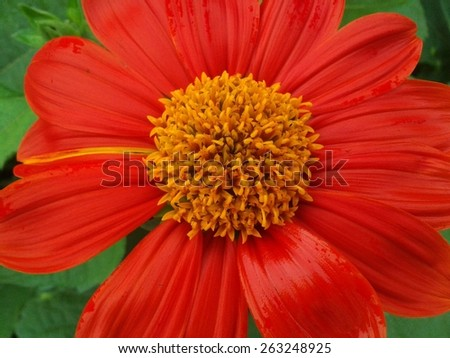 Flower beautiful texture background - stock photo