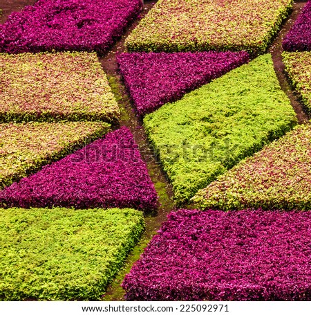 Flower bed in Madeira botanical garden, natural background.  - stock photo