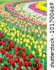 Flower bed of multicolored tulips, Keukenhof, the Netherlands - stock photo