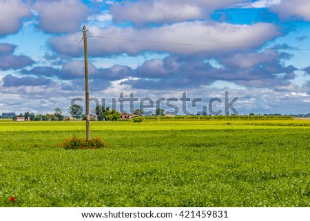 flower bed of poppies at the foot of an electricity pole in a cornfield