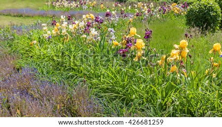 Flower bed with blooming iris, forget-me-and daylilies - stock photo