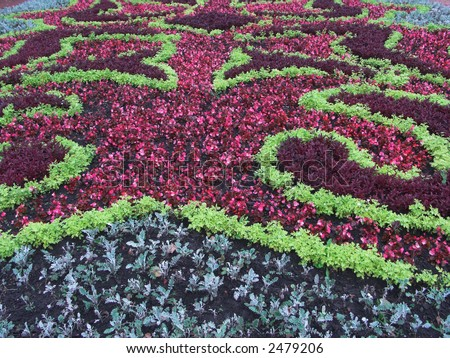 Flower bed with motley flowers, reddish and green - fine background - stock photo