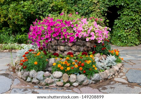 flower bed with petunia and marigold. Landscape design - stock photo