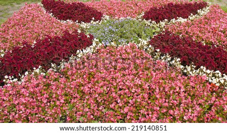 Flower bed with pink begonia and red coleus, recorded on Flower bed exhibition in park Kuzminki of summer 2013 year, Moscow. - stock photo